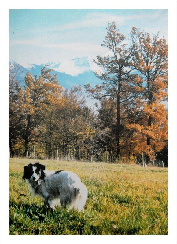 L 39 automne dans nos montagnes - Nous n irons plus au bois les lauriers sont coupes ...